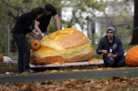 On the North Lawn driveway, volunteers carve one of three massive pumpkins shipped in for the festivities