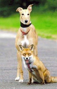 Jasmine and fox