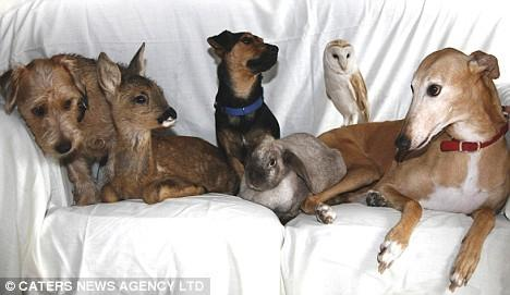 Pictured from the left are: Toby, a stray Lakeland dog; Bramble, orphaned roe deer; Buster, a stray Jack Russell; a dumped rabbit; Sky, an injured barn owl; and Jasmine